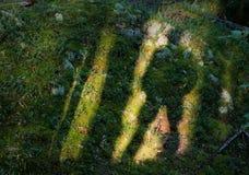 Schaduw van de man op een groen gras. Royalty-vrije Stock Fotografie