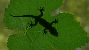 Schaduw van een gekkohagedis die op groene bladeren 3d illustratie kruipen Stock Fotografie