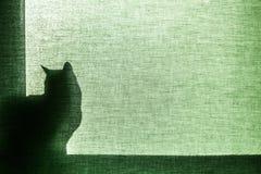 Schaduw van een kat op blind canvas Royalty-vrije Stock Foto's