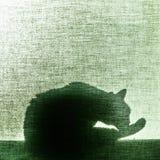 Schaduw van een kat op blind canvas - vierkant Royalty-vrije Stock Foto