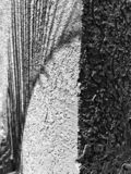Schaduw van een palmblad met textuur stock afbeeldingen