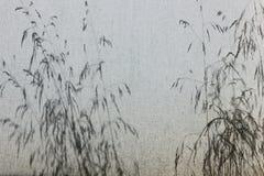 Schaduw van grassen op canvas openlucht Stock Fotografie
