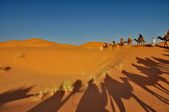 Schaduw van Kamelen in Merzouga-woestijn Stock Foto