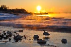 Schaduw van vogel in de winter Royalty-vrije Stock Foto
