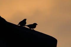 Schaduw van vogel op het dak Stock Foto