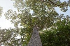 Schaduwbomen Stock Afbeelding