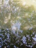 Schaduwbomen in het water stock foto