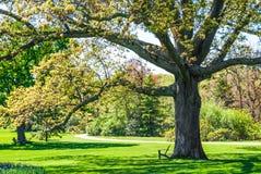 Schaduwboom in Park Stock Afbeeldingen