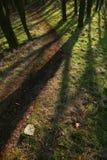Schaduwen in het bos stock fotografie