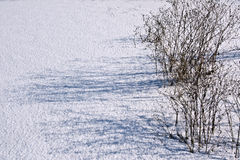 Schaduwen op de sneeuw Stock Foto