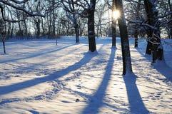 Schaduwen op de Sneeuw royalty-vrije stock afbeelding