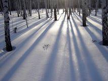 Schaduwen van bomen stock foto's