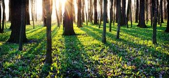 Schaduwen van bomen in de lentebos Royalty-vrije Stock Afbeeldingen