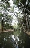 Schaduwen van bomen in water royalty-vrije stock foto