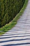Schaduwen van cipressen, Toscanië stock afbeelding