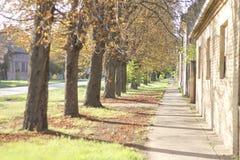 Schaduwen van de bomen op straat Royalty-vrije Stock Afbeelding