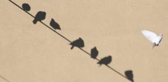 Schaduwen van duiven Royalty-vrije Stock Foto's