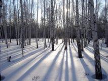 Schaduwen van een bos stock foto