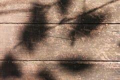 Schaduwen van installaties op de raad Stock Foto's