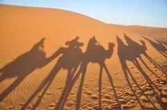 Schaduwen van kamelen in de woestijn van de Sahara Stock Fotografie