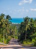 Schaduwen van palmen op de weg van het Eiland Phangan stock afbeeldingen