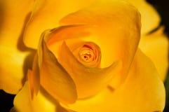 Schaduwen van sinaasappel Royalty-vrije Stock Foto's