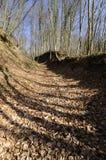 Schaduwrijk bos Stock Foto's