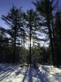 Schaduwrijk de winterhout stock fotografie