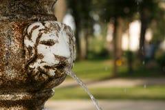 Schaduwrijk Park Het leeuw` s hoofd in fontein spuit een stroom van duidelijke wat Royalty-vrije Stock Foto's