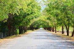 Schaduwrijke bomen naar Perdernales Stock Afbeeldingen