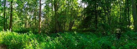 Schaduwrijke middag in zomer vergankelijk bos royalty-vrije stock afbeelding
