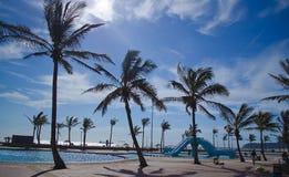 Schaduwrijke palmentribune op Durban beachfront. stock afbeelding