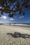 Schaduwrijke vlek onderaan een pohutukawaboom op een strand van het het Noordeneiland, Nieuw Zeeland. Stock Afbeeldingen