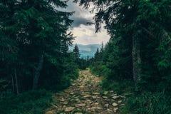 Schaduwrijke weg door de heuvels royalty-vrije stock afbeelding