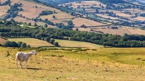 Schaf in Brecon erleuchtet Nationalpark in Wales, Großbritannien Lizenzfreie Stockfotografie