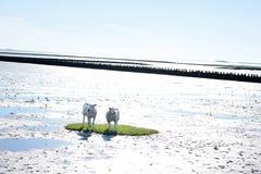 Schaf-Insel Stockbild