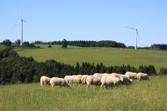 Schaf-und Wind-Turbinen Lizenzfreie Stockfotos