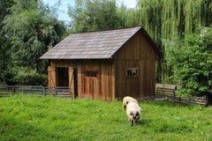 Schaf-Weiden lassen und Stall Stockbilder