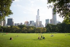 Schaf-Wiese im Central Park, Manhattan, New York City Stockfoto