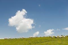 Schafe auf dem Abhang Stockfotografie