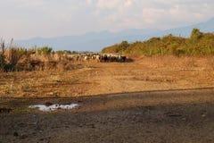 Schafe auf dem Bauernhof Stockfoto