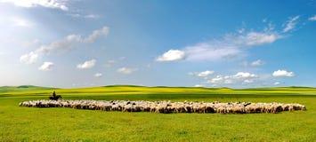 Schafe auf der beträchtlichen Wiese stockfotos