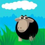 Schafe auf der Wiese Stockbilder