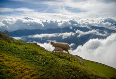 Schafe auf einem Abhang auf einem Hintergrund von weißen Wolken Stockbild