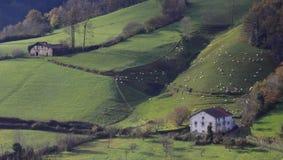 Schafe auf einem Bauernhof in den aralar Bergen, Navarre Lizenzfreie Stockfotografie