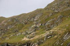 Schafe auf einem Berg lizenzfreie stockfotos