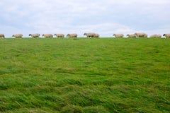 Schafe auf einem Graben auf der Nordsee fahren, zwischen Bensersiel und Neuharlingersiel, Deutschland die Küste entlang Lizenzfreie Stockfotografie