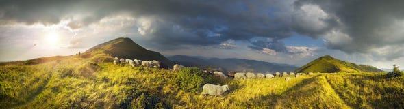 Schafe auf einer Sommerweide Stockbild