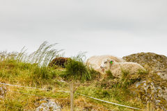 Schafe auf Felsenhügel Lizenzfreie Stockfotos