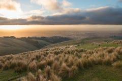 Schafe auf Hochlandweide auf Sonnenuntergang Lizenzfreie Stockbilder